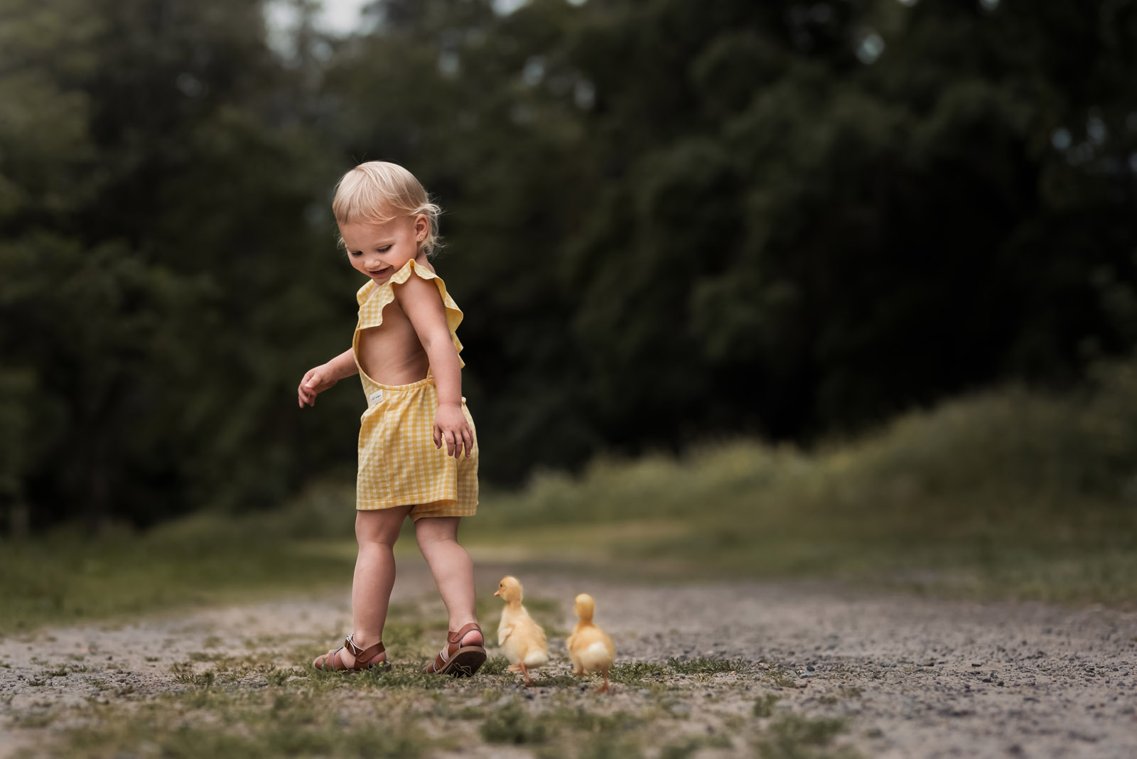 photographing pets ducklings following small girl along path by melissa haugen