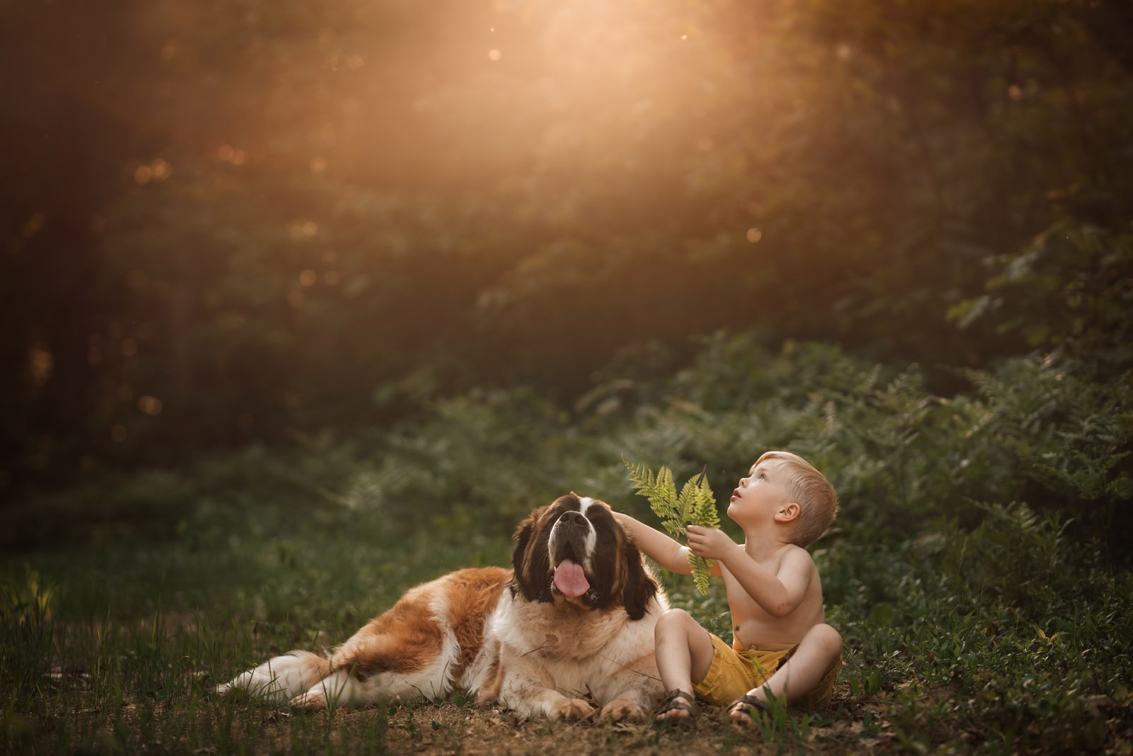 photographing pets large dog and small boy in warm light st bernard by meg loeks