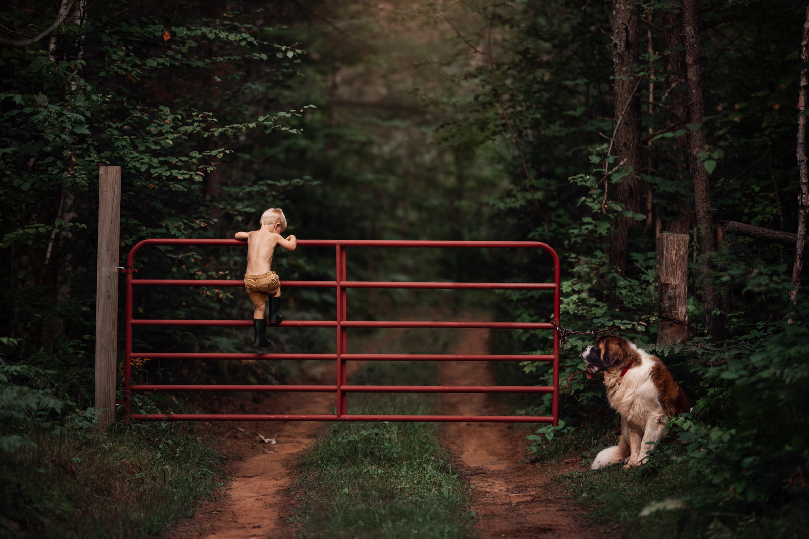 photographing pets small boy climbing fence with large dog st bernard by meg loeks