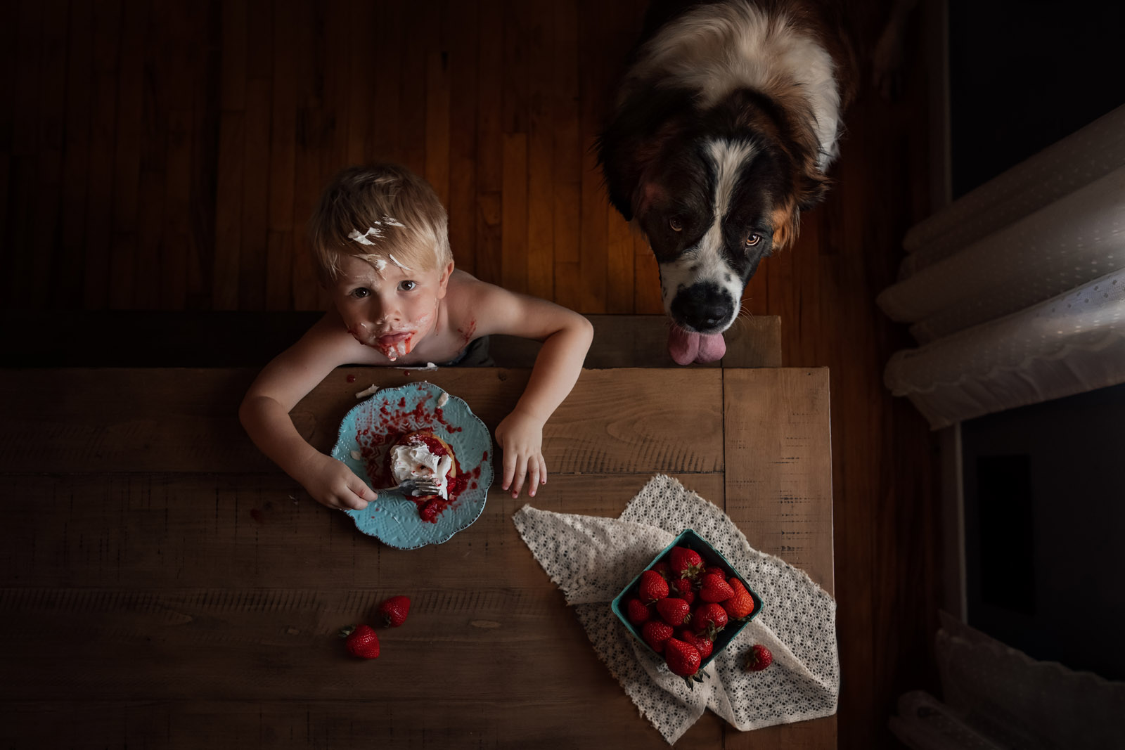 photographing pets small boy eating strawberry shortcake messy with large dog st bernard by meg loeks