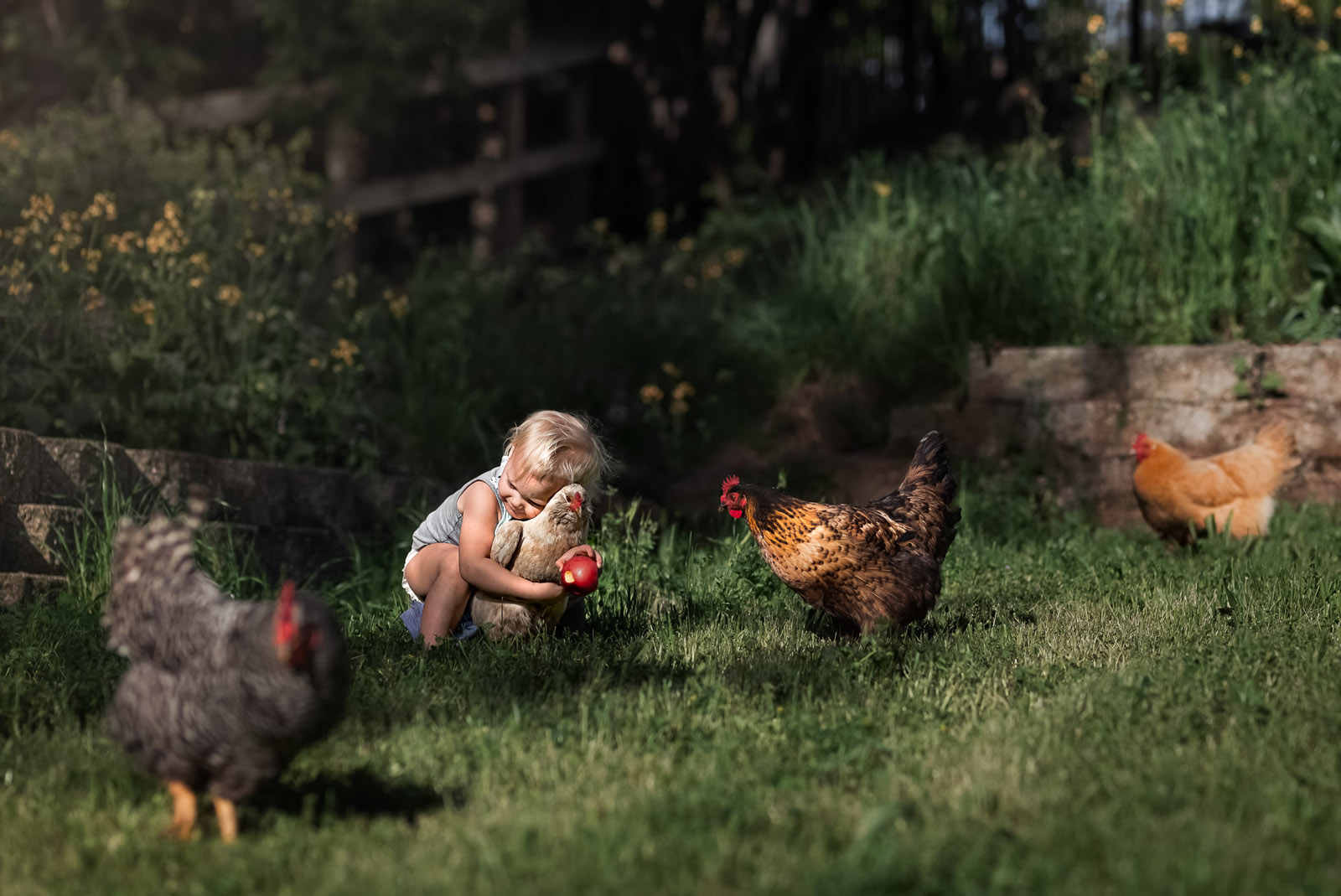 small girl hugging chicken in grass by melissa haugen photographing pets