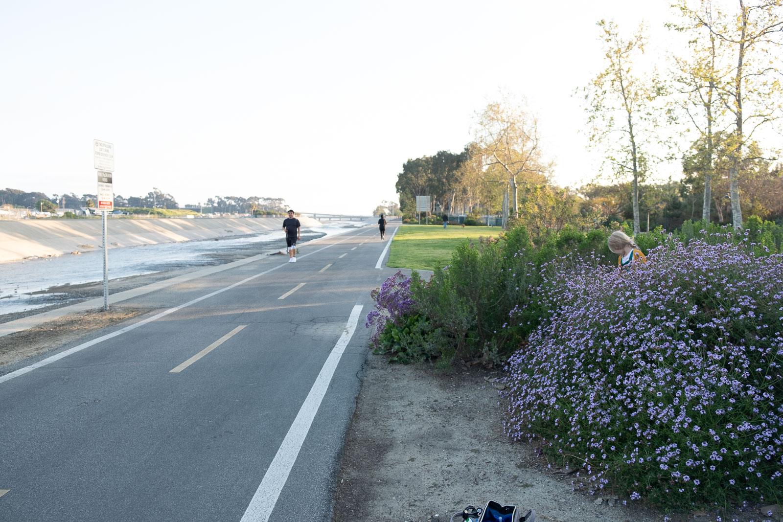Unexpected Backdrop flower bed of purple flowers pullback karlee hooper