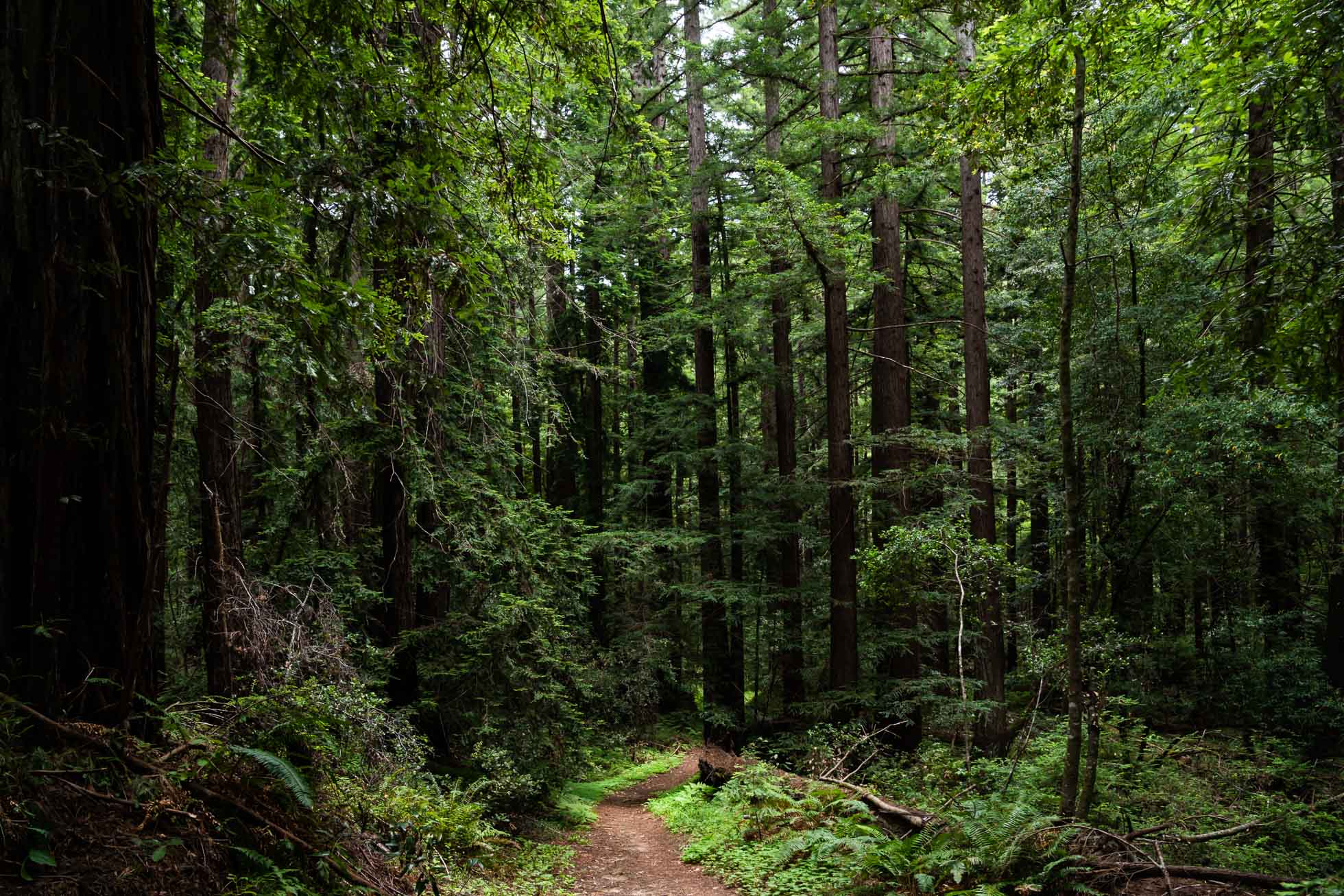 fueling creativity redwood trees and trail by jennifer carr