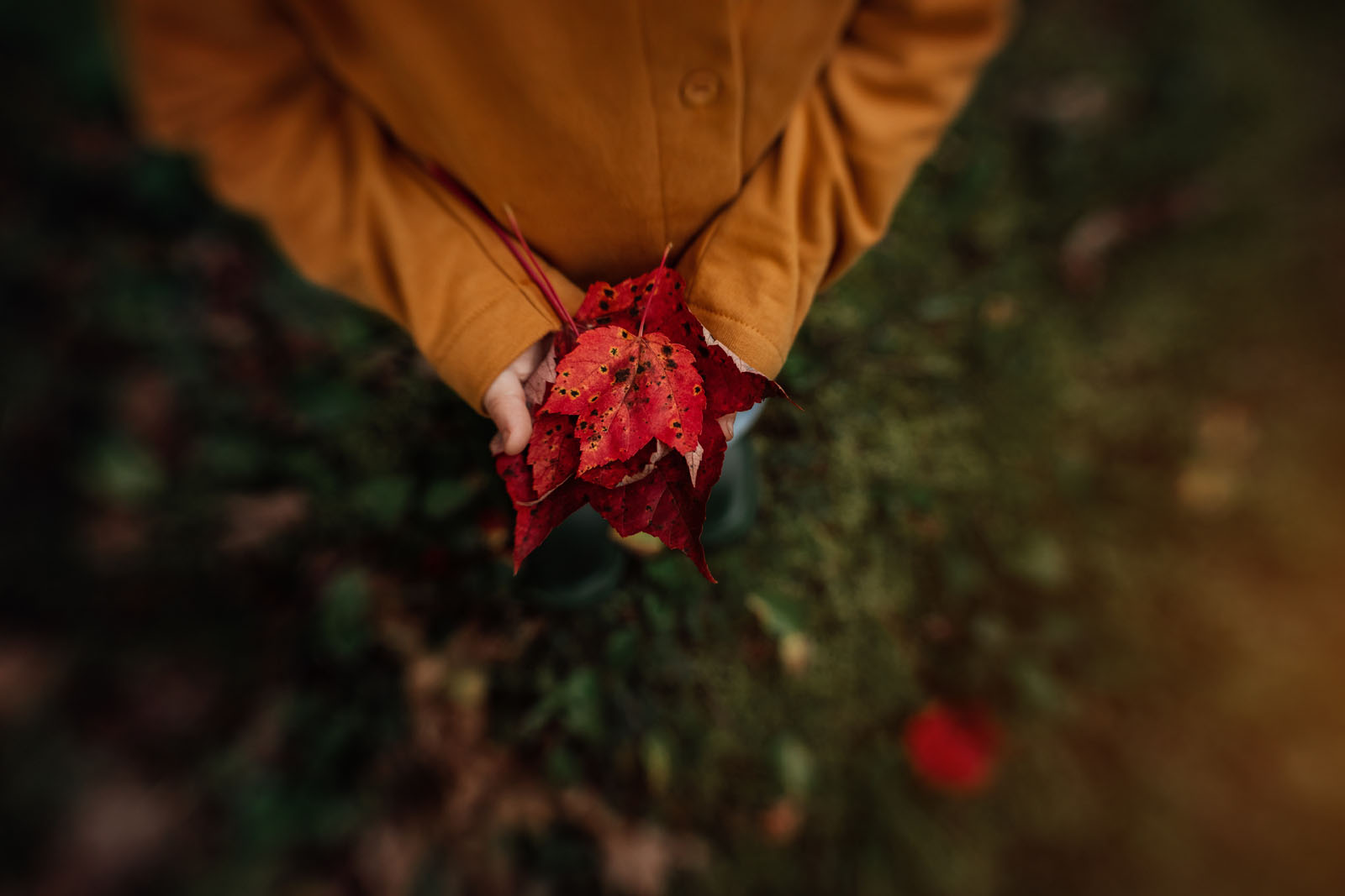 megloeks_image16 child holding red leaves autumn in hands fall activities by meg loeks