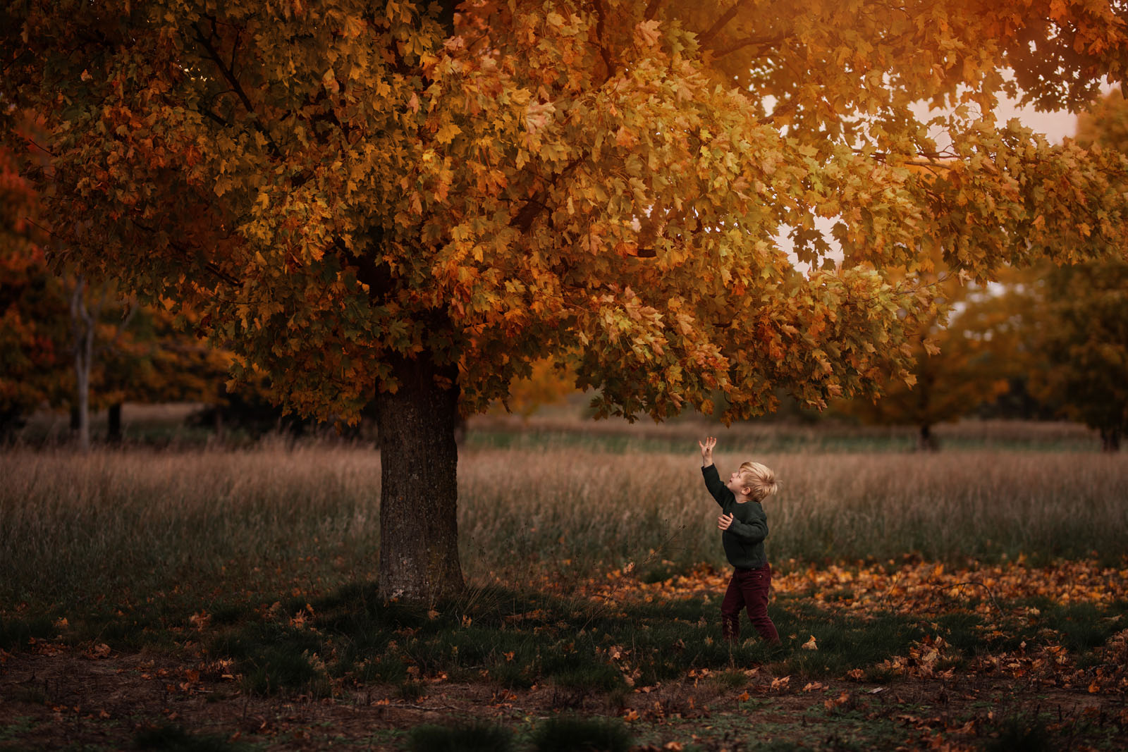 megloeks_image17 child reaching for leaves from autumn tree yellow fall activities by meg loeks