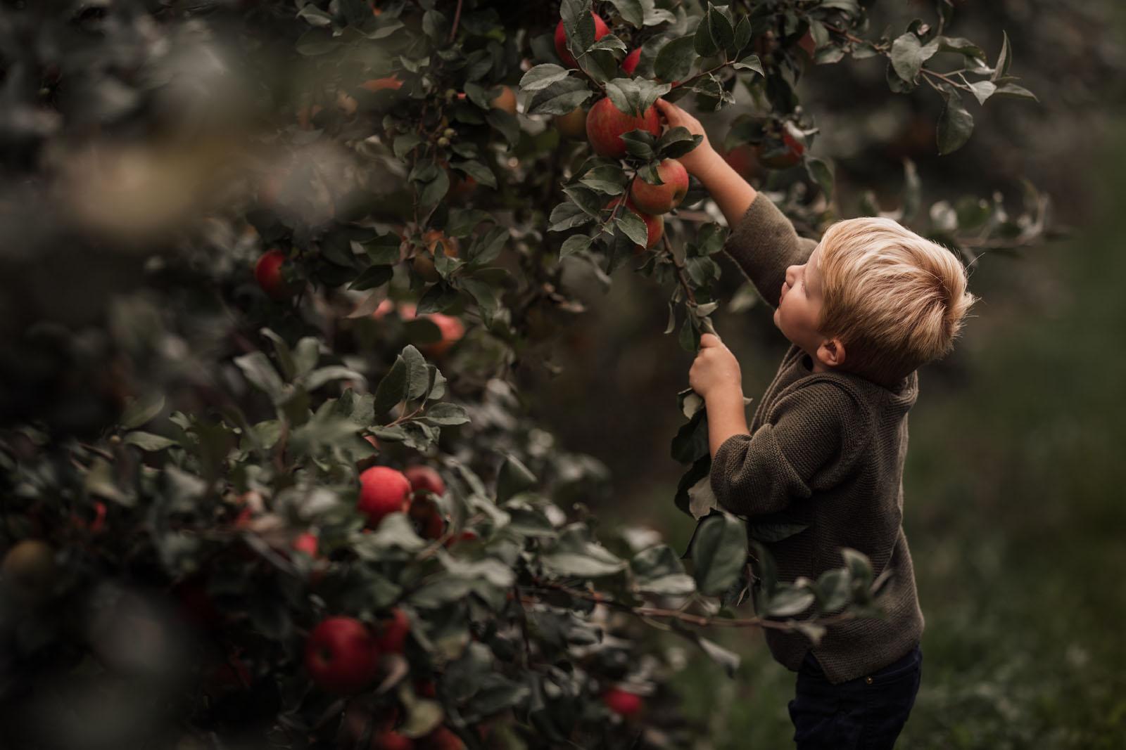 megloeks_image23 child picking apples from tree fall activities by meg loeks