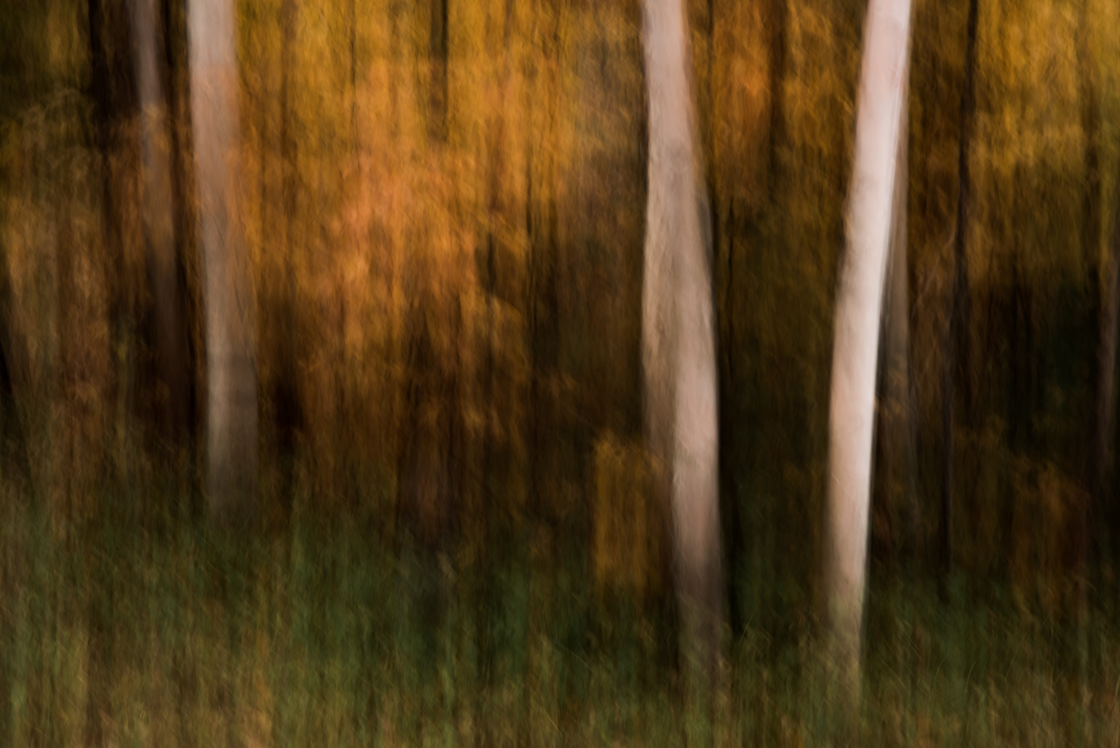 photographing fall color panning trees autumn yellow impressionist sarah gupta
