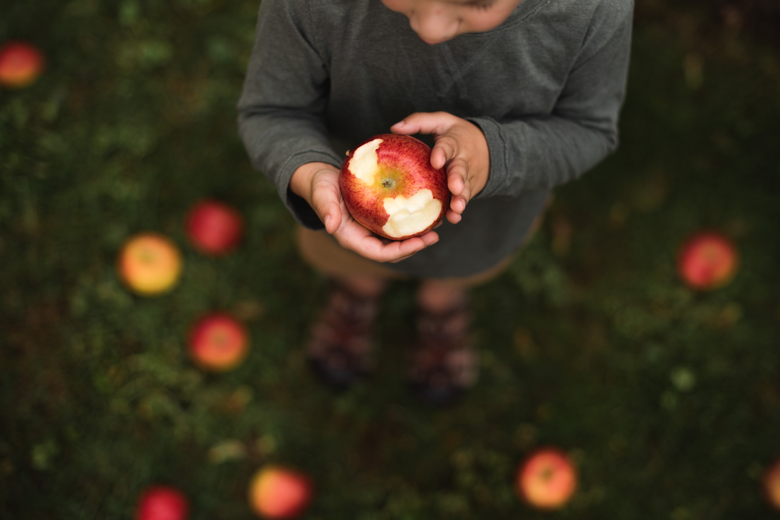 photographing fall color small boy holding apple in hands with bite sarah gupta